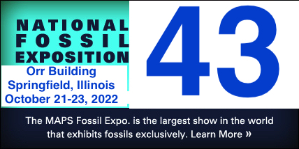 The MAPS Fossil Expo is the largest show in the world that exhibits fossils exclusively. Click to learn more.